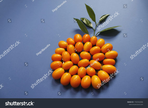 Kumquats or Cumquats in a circle with blue background